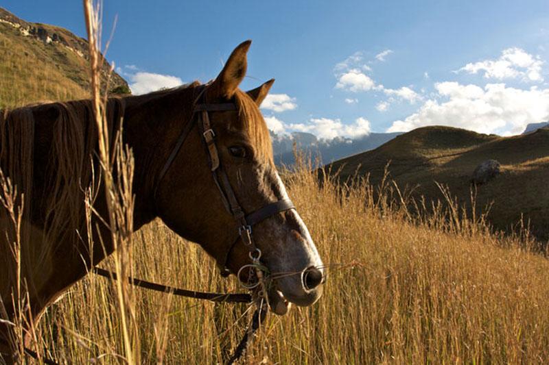 Cullinan Adventure Horse Riding